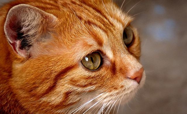 hlava kočky.jpg