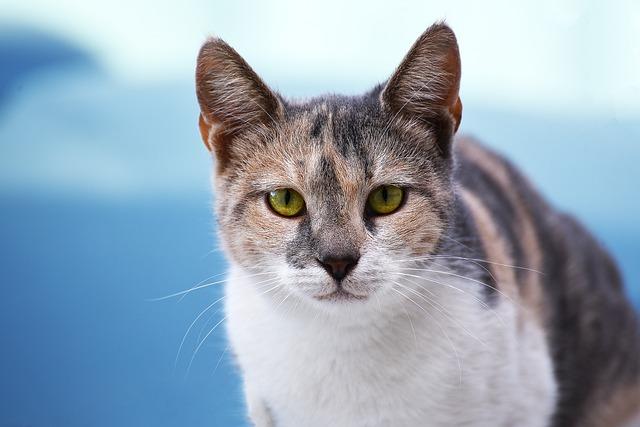 strakatá kočka.jpg