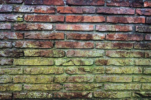 plesnivá zeď