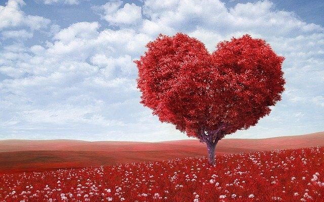 strom s červenou korunou ve tvaru srdce